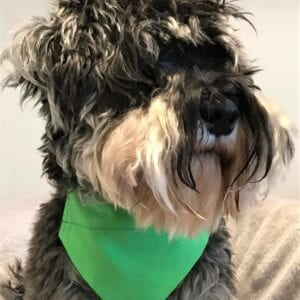 Dog Bandana Irish Green by Woof Stuff Dublin Ireland